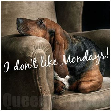 I Don't Like Mondays! Pictures, Photos, and Images for