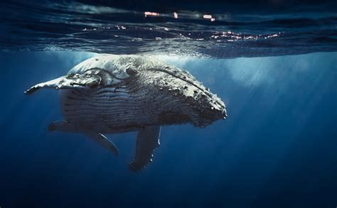 On High Seas of Bitcoin Trading, Whales Still Make Waves